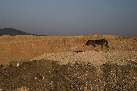 Lonely and hungry dog in the Turkish desert Stock Photo
