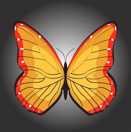 Orange butterfly on black background. Banco de Imagens