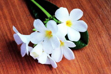 flower white leelawadee flower Stock Photo