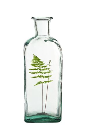 fern in bottle isolated on white