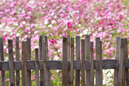 age fence with blurred flower in the back ground Stock Photo