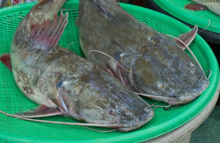 Asian redtail catfish sale at local market,Thailand  Hemibagrus wyckioides, Bagridae