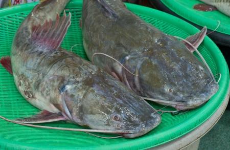 redtail: Asian redtail catfish sale at local market,Thailand  Hemibagrus wyckioides, Bagridae