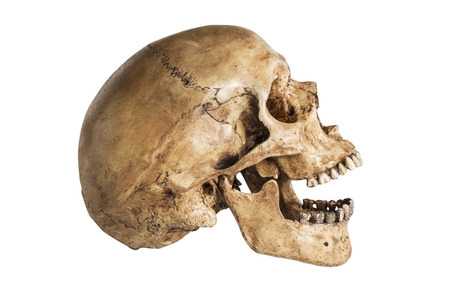 agape:  side of skull model in open the mouth pose isolated on white background