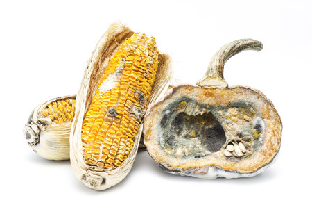 moldy pumpkin and corn on white background