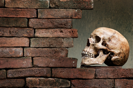 human skull with old brick wall Stock Photo