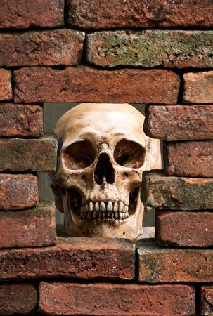 human skull behind the hole of old brick wall