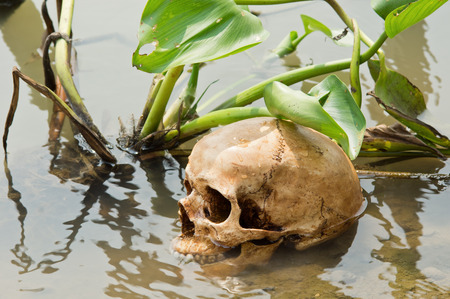 Human skull at riverbank with water hyacinth  Eichhornia crassipes Solms
