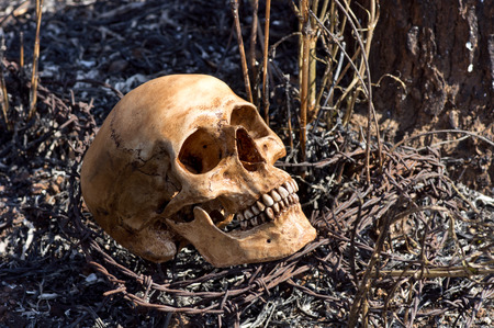 Still life photography, Human skull and barbwire amid the aftermath of a bush fire concept