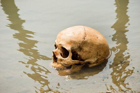 skull at riverbank Stock Photo