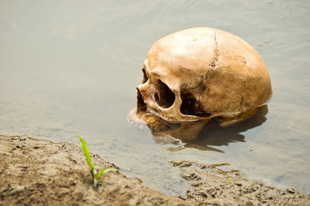 skull at riverbank with growing grass