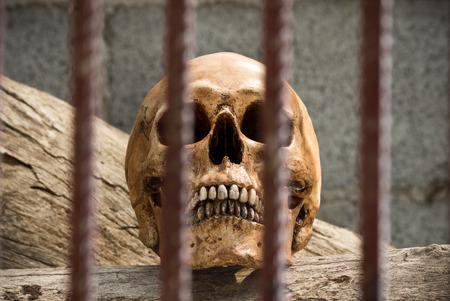 Human skull behind iron bars in prisoner concept
