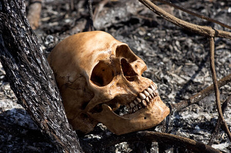 Still life photography, Human skull amid the aftermath of a bush fire concept photo