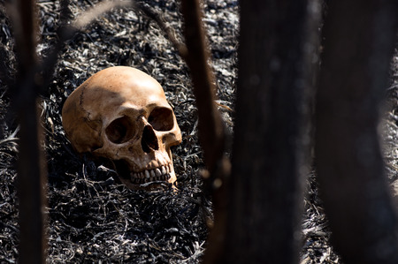 Still life photography, Human skull amid the aftermath of a bush fire concept