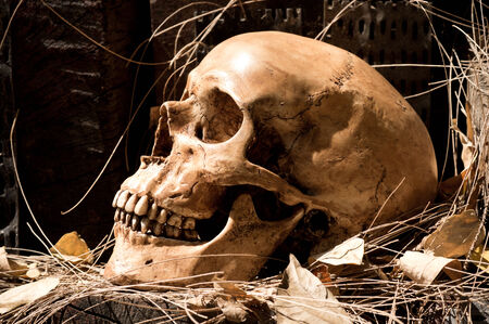 Still life photography, Human skull with timber and dry leaf in jungle concept