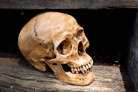 Still life photography, Human skull with decay timber Stock Photo