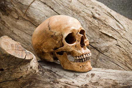 Still life photography, Human skull with timber in jungle concept