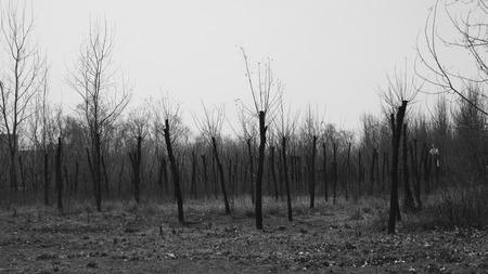 desolate: Desolate land Stock Photo