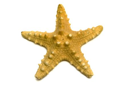 The sea souvenir a starfish on a white background is isolated