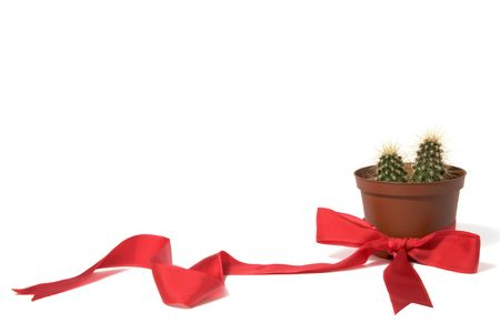 Cactus in orange decorative pot with red bow on white photo
