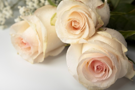 Three pink roses lying on a white table Stock Photo
