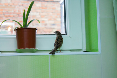 sparrow on the window photo