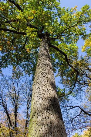 tall tree: tall tree trunk Stock Photo