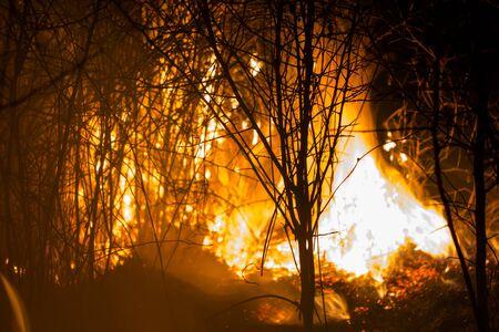 burning bush: burning bush at night