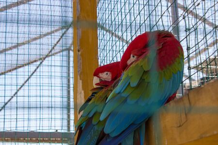 the two parrots: two parrots in cages Stock Photo