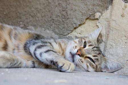 wandering: wandering cat sleeps on a stone at lunch