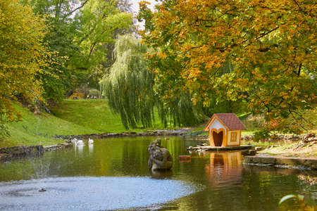 autumn park with a pond,picturesque autumn park with lake and swans