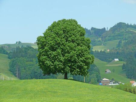 cheated: tree in switzerland