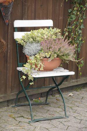 pflanzen: Pflanzen, Stuhl, alt, herbst, garten, erika, gartenblumen, malerisch, klappstuhl Stock Photo
