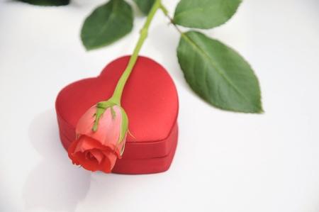 Rose, Herz, Rosen, Rot, Liebe, Geburtstag, Hochzeit, Hochzeitstag,.. Stock  Photo, Picture And Royalty Free Image. Image 10751463.