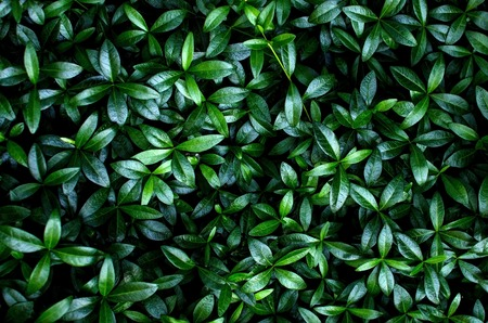 buch: Close up of green hedge on the street Stock Photo