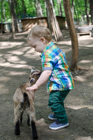 baby goat: Small baby boy is playing with animals in the park