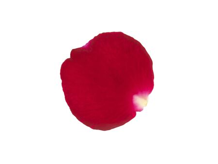 Red rose petals isolated on a white background