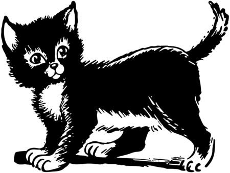 americana: Adorable Kitten