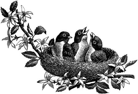 Baby Birds  イラスト・ベクター素材