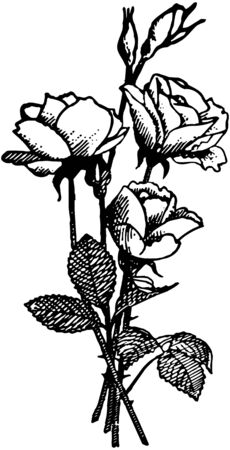 A Rose Is A Rose Vector