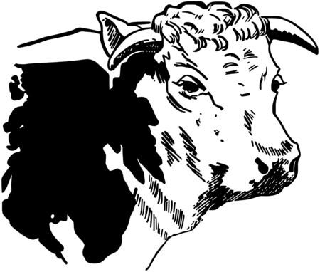 steer: Cow3.jpg
