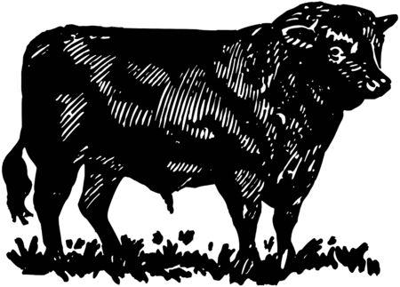 steers: Bull