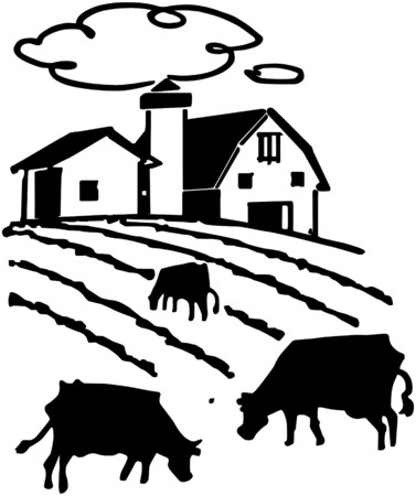 steers: Cows Grazing On Farm