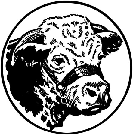 Cows Head Illustration