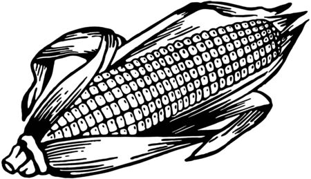 Ear Of Corn Stock Illustratie