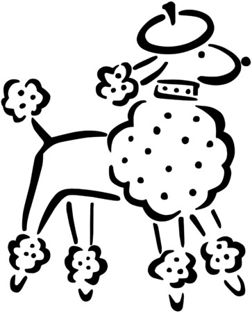 French Poodle Vector