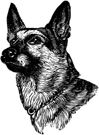 pooches: German Shepherd Illustration