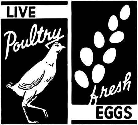 Live Poultry Vector