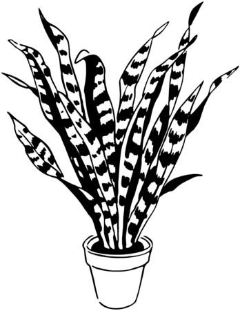 aloe vera plant: Plant 6