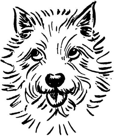 小さな白い犬